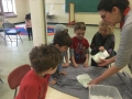 learning about blubber for science